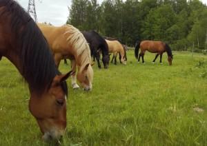 Zirgi-jun