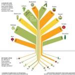 Skirnu samazinasanas koks